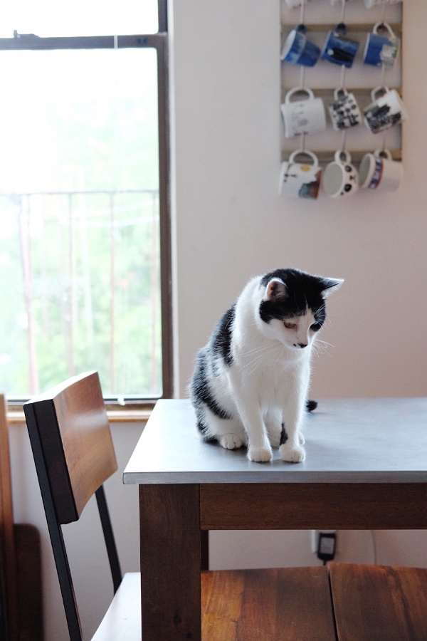 Zoe the cat in the kitchen. (Check out Steph and Shane's mug collection!)